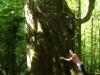 albero abbracciato 2