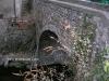 ponte_dei_gobit_asso